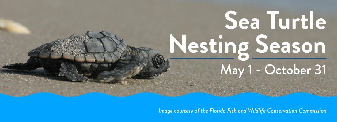 Sea Turtle Nesting Season is May 1 - October 31