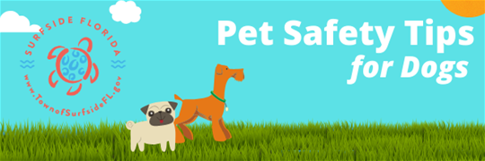 Pet Safety Tips for Dogs (1)
