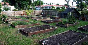 surfside-urban-community-garden